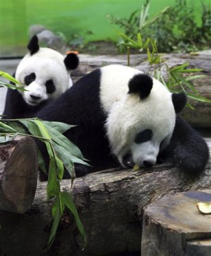 Image: Pandas