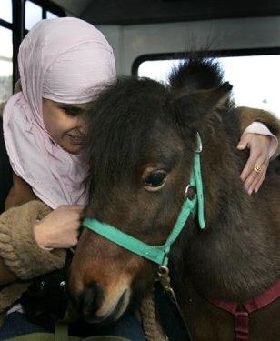 Horse Blind Muslim