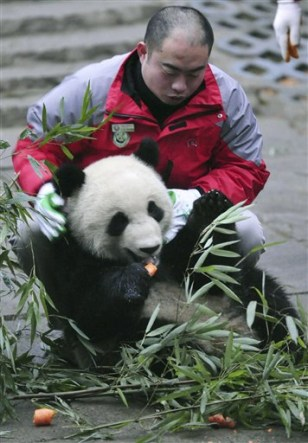 Image: China Expo Pandas