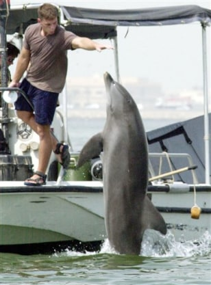 IMAGE: DOLPHIN BEING TRAINED