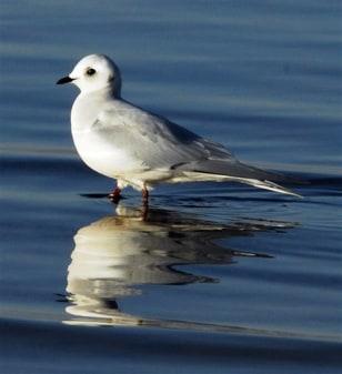 IMAGE: Gull