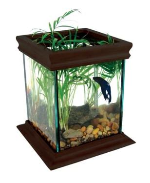 Image: Fish tank