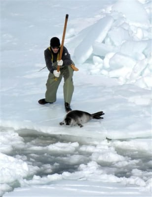 Image: Seal hunter