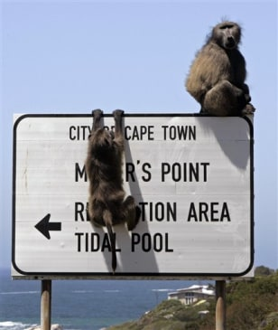 Image: Baboons atop sign