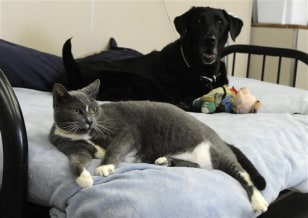Image: Chance the cat and Chester the dog