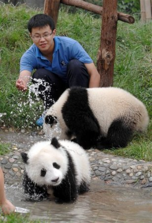 Image: Pandas with keeper
