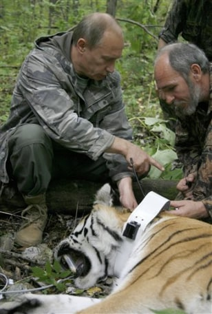 Image: Putin with tigress