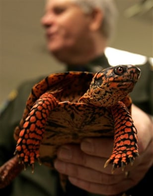 Image: Box turtle