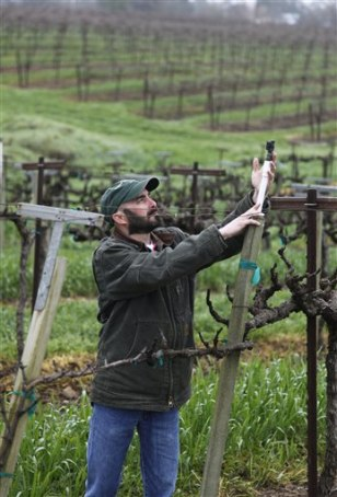 Image: Vineyard manager checks sprinkler