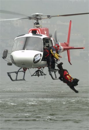 Image: Mas the dog jumps from a helicopter