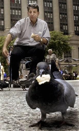 Image: Pigeons