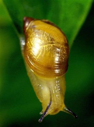 Image: Snail