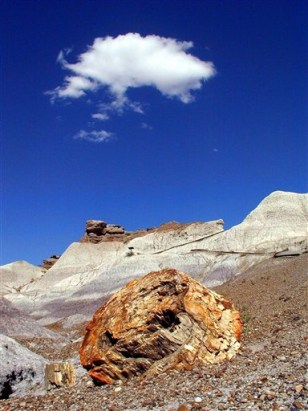 Image: Petrified Forest