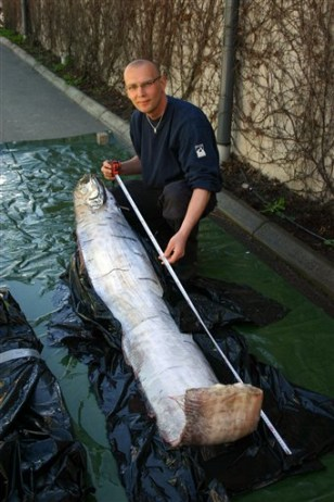 Image: Man with Giant Oarfish