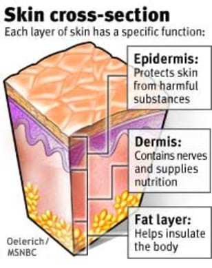 HEADLINES: Skin cross-section