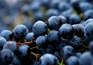 Image: Grapes