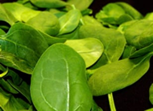 Image: baby spinach