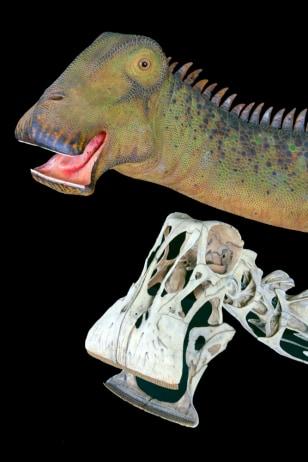 Image: Nigersaurus taqueti