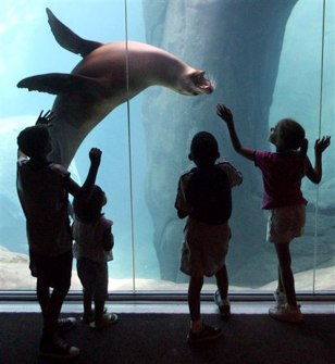 Image: Kids visit the zoo