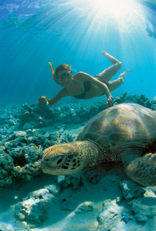 Image: A green sea turtle