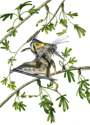 Image: Nemicolopterus crypticus