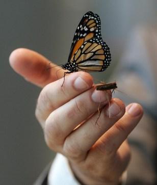Image: Audubon Insectarium