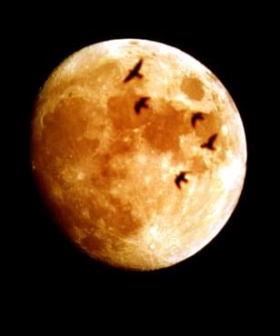 Image: Lunar eclipse