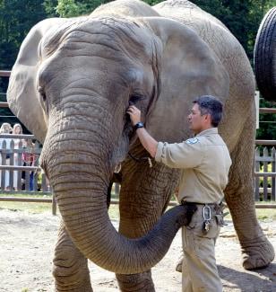 Maggie the elephant