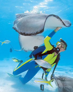 A diver swims with stingrays off of Cayman Brac