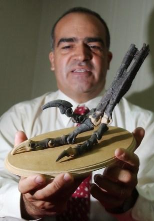 Image: Dinosaur claws