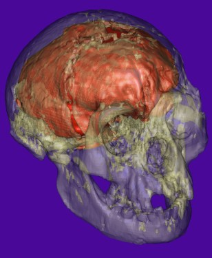Image: Hobbit 3-D skull image