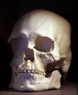 casting of Kennewick Man skull