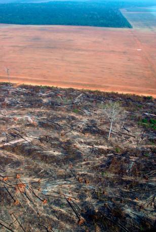 IMAGE: LOGGED AMAZON FOREST