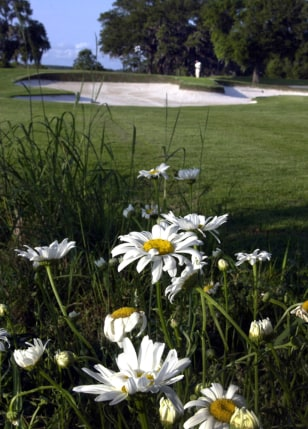 IMAGE: WILDFLOWERS AT GOLF COURSE