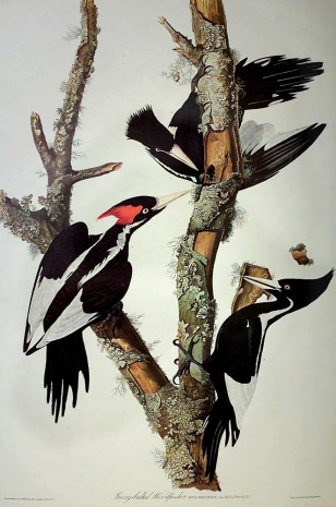 Image: Woodpeckers