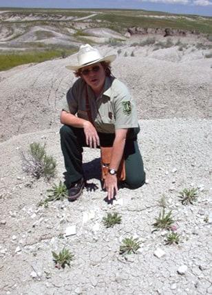 exposed dinosaur fossils