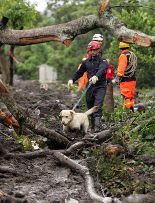 Image: Spanish members of United Firefighters use a dog to look for mudslide survivors in Panabaj, Guatemala on Sunday.