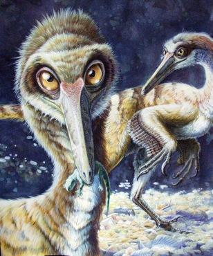 Image: Buitreraptor