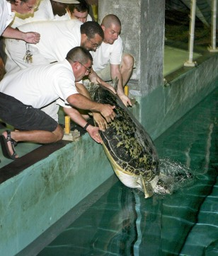 IMAGE: TURTLE RETURNED TO AQUARIUM