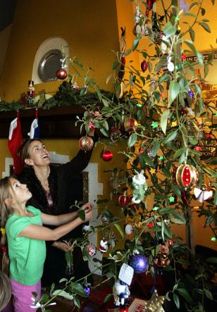 Image: Rented Christmas tree.