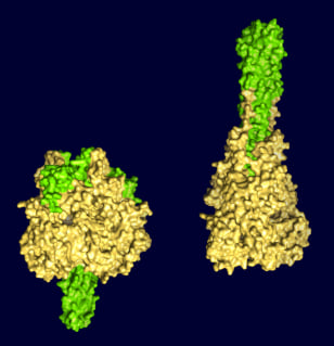 Image: F protein, before and after