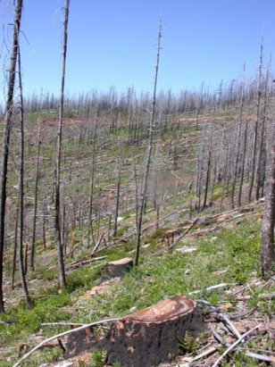 IMAGE: LOGGED AREA OF FOREST BURNED IN FIRE