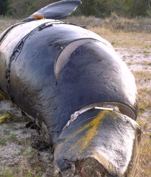 IMAGE: SEVERED MARKS ON WHALE