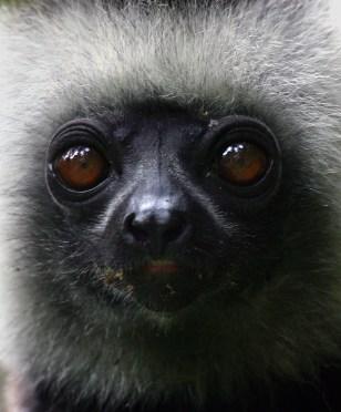 IMAGE: LEMUR IN MADAGASCAR