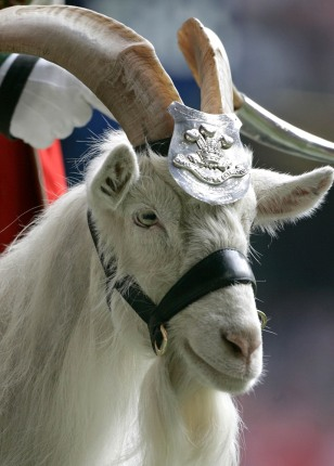 Image: Biily Goat parading at the Millennium Stadium in Cardiff