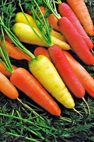 Image: Colorful Harvest carrots
