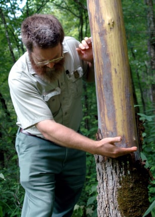 Image: Forest worker David Taylor.