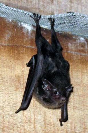 Image: Baby bat