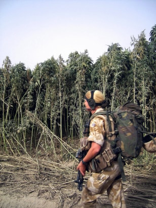 IMAGE: Soldier and marijuana forest