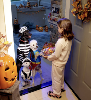 Trick-or-treating pooches